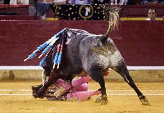 """Bull gores matador in the eye as spectators gasp in shock"" - GOOD!"