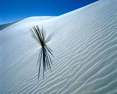 Click to close image, click and drag to move. Use arrow keys for next and previous. White Sands National Monument, New Mexico Usa, Gypsum, Close Image, Cool Photos, Amazing Photos, Dune, Dandelion, Waves