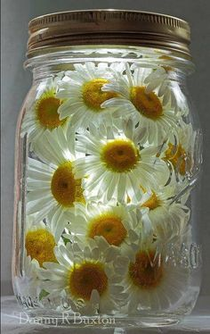 Daisy - Mason Jar - from The Enchanted Cove