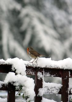 This is why we love wild birds so much. The beautiful pictures of scenery you can get with birds #blizzard