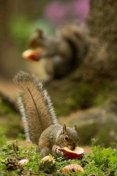 squirrel in the woods. Vida Animal, Mundo Animal, Beautiful Creatures, Animals Beautiful, Animals And Pets, Cute Animals, Wild Animals, Autumn Animals, Baby Animals