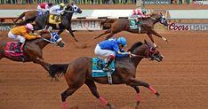 Jess Good Candy, 2015 All American Futurity. Quarter Horses, Running Horses, Horse Racing, American, Cats, Animals, Image, Diamond, Gatos
