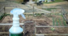 organic garden spray that works: Distilled water Witch hazel or rubbing alcohol Dried herbs: peppermint, spearmint, citronella, lemongrass, catnip, lavender, etc. I recommend using at least one herb from the mint family.