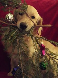 River's Christmas Tree and click for more pet photo ideas.