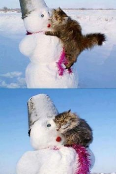 """Awwwwww.... this is adorable. Maybe the kitty was too warm with all that fur and was thinking """"ahhhh, cooooollldddd"""""""