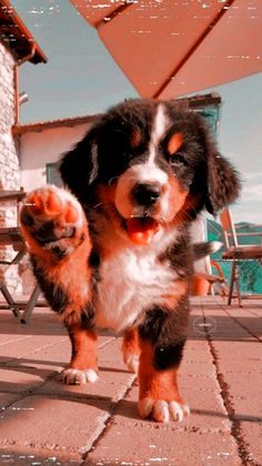 dogs and puppies ; dogs and puppies for sale ; dogs that dont shed ; Super Cute Puppies, Baby Animals Super Cute, Cute Baby Dogs, Cute Little Puppies, Cute Little Animals, Cute Funny Animals, Pics Of Cute Puppies, Funny Animal Jokes, Baby Animals Pictures