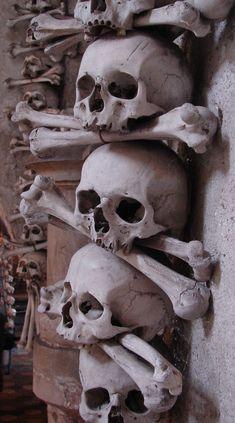Indian Skull Tattoos, Skull Reference, Growth And Decay, Scary Tattoos, Ancient Greek Art, Bizarre Art, Nose Art, Animal Skulls, Skull And Bones