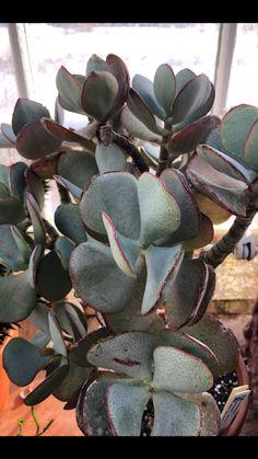 Greenhouse Pictures, Succulents, Plants, Succulent Plants, Plant, Planets