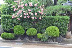 garden ideas Japanese Garden Landscape Plants Japanese Inspired Garden Japanese Rock Garden Garden Design Ideas Japanese Plants And Trees Japanese Bush  japanese garden ideas plants
