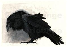 A Raven by Marc Stroucken