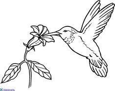 Bird Coloring Pages Free from Animal Coloring Pages category. Printable coloring pages for kids that you can print and color. Have a look at our collection and printing the coloring pages for free. Cat Coloring Page, Disney Coloring Pages, Coloring Pages To Print, Free Printable Coloring Pages, Coloring Pages For Kids, Coloring Books, Coloring Sheets, Kids Coloring, Hummingbird Colors