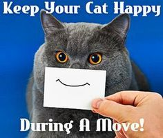 Moving With A Cat - Use these 13 tips for a smooth move with all of your pets: http://www.maxrealestateexposure.com/13-tips-for-moving-with-pets/ #realestate #moving