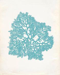 Vintage Ocean Kelp Seaweed Print 8x10 P197 by OrangeTail on Etsy