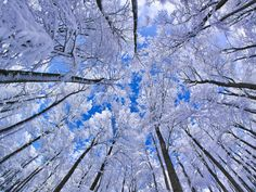 See a photo of snow covering trees in a beech forest in Germany, and download free wallpaper from National Geographic.