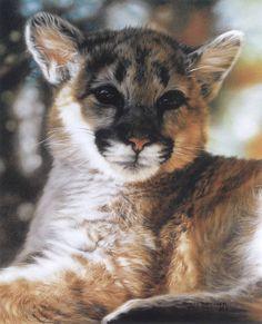 Cat picture cougar lesley harrison