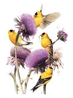 Goldfinch on Thistle ~ Marjolein Bastin Nature Sketches Gravure Illustration, Bird Illustration, Marjolein Bastin, Nature Sketch, Motifs Animal, Nature Artists, Dutch Artists, Watercolor Bird, Watercolor Landscape