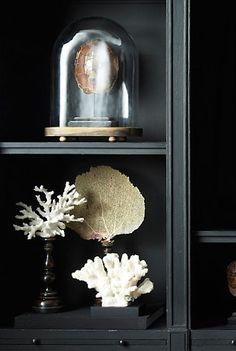 Coral from Restoration Hardware, black bookcase Interior Simple, Home Interior, Interior Design, Coastal Style, Coastal Decor, Sea Coral Decor, Coral Decorations, Curiosity Cabinet, Interior Inspiration
