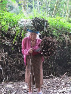 An old Balinese woman hauling bundles of stalks in Bali, Indonesia -- hard work until the very end.