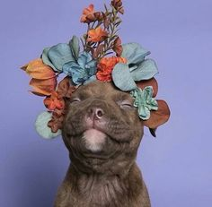 Pit bull puppy smiling with a flower crown
