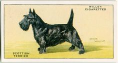 Dog Artwork, Collector Cards, New York Public Library, Book Of Shadows, Yorkie, Art Drawings, Terrier, Moose Art, Scottie Dogs