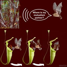 To maintain mutualism, carnivorous pitcher plants specifically appeal to their animal partners' perception. Image credit: Michael G. Schöner et al / C.C. Lee / M.D. Tuttle.
