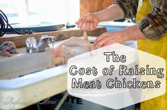 The Cost of Raising Meat Chickens | www.reformationacres.com