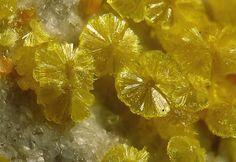 Weeksite, K2(UO2)2Si6O15•4(H2O), Carnotite, K2(UO2)2(VO4)2·3H2O, Anderson Mine, Date Creek Basin, Yavapai Co., Arizona, USA. Nice suns of Weeksite with some small orange Carnotite. Fov 2mm. Copyright: © Elmar Lackner 2009