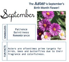 September Birth Flower Meaning and Facts
