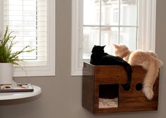 create a window perch for your cat