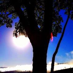 """""""Médico dos médicos dá-me o teu remédio, uma folhinha da árvore do céu."""" 🍃  .  .  .  .  .  .  .  #ÉsSuficiente #DT18 #JordaniaIsraelDT #highplaces #mountains #nature #tree #sun #morning #winter #Brazil #visualarts #loveforpic #instaphoto #instaclick #instalike #goodmorning #instamorning #intasky #instablue #instablack #instawhite #instacolors"""