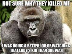 Cincinnati Zoo Harambe memes - Bing images