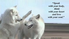 Beautiful Wolf Love Forever Quotes | The Beauty of wolves images Beauty HD wallpaper and background photos ...