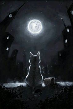 Meow at the Moon!