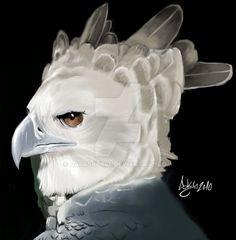 Harpy eagle by DarkSky666 on DeviantArt