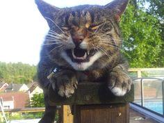 High Cat!