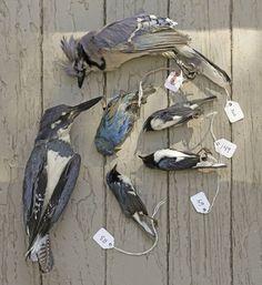 Glass architecture is killing millions of migratory birds – Quartz