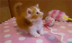 The 226 Best Cat GIFs You Will Ever See http://www.resharelist.com/cat-gifs/