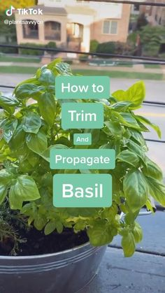 Inside Plants, Cool Plants, Household Plants, Plants Are Friends, Plant Aesthetic, House Plant Care, Planting Vegetables, Garden Care, How To Plant Basil