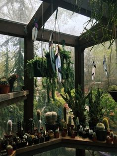 nice greenhouse. I love the dark wood. too many cacti for me though lol