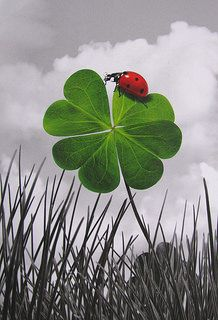 Double Luck! #ladybug ➕More Pins Like This One At FOSTERGINGER @ Pinterest ➖