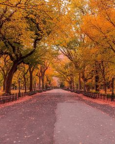 The Mall in Central Park by @brucegetty  New York City Feelings  The Best Photos and Videos of New York City including the Statue of Liberty, Brooklyn Bridge, Central Park, Empire State Building, Chrysler Building and other popular New York places and attractions