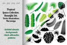 Tropical leaves collection by mary_shop on @creativemarket