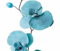 Teal orchids.