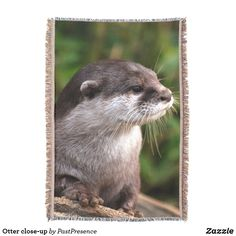 Otter close-up throw blanket Photo Memories, Summer Evening, Throw Blankets, Otters, Party Hats, Are You The One, Family Photos, Close Up, Art Pieces