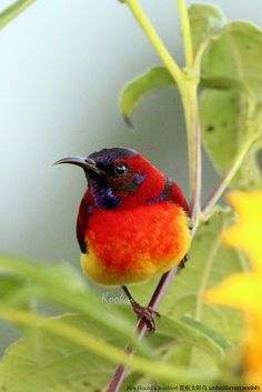 I do not know what the name is for the colourful bird, but it is lovely.