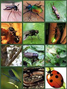 Dossier complet sur les insectes #eduprim #lecture