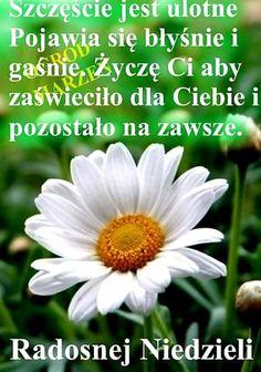 Motto, Good Morning, Plants, Birthday, Good Morning Funny, Pictures, Polish, Buen Dia, Birthdays