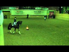 Donna Summer is the Fiercest Dressage Horse You've Ever Seen - Horse Collaborative