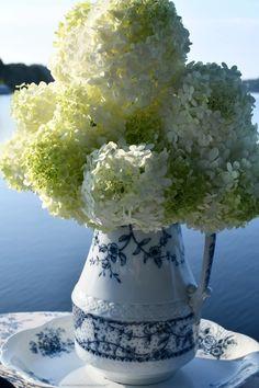 Blue transferware pitcher with hydrangeas | ©homeiswheretheboatis.net #transferware #blueandwhite #hydrangeas Limelight Hydrangea, My Flower, Flowers, Flower Centerpieces, Hydrangeas, Bloom, Royal Icing Flowers, Flower, Florals