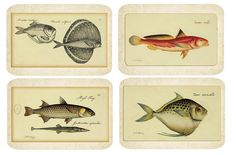 scientific fish illustrations - wall art for beach themed nursery